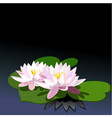water lilies vector image