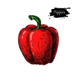 Red Bell Pepper hand drawn vector image