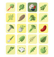 vegetables and greens collection icon set vector image