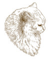 engraving of big cat muzzle vector image