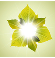spring sunny leafs vector image