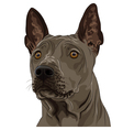 Thai ridgeback dog breed vector image