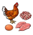 Chicken meat with egg and hearts vector image