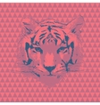 Tiger fashion vector image