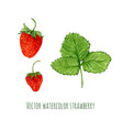 with watercolor strawberry hand drawn berry for vector image