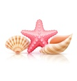 Set of summer sea shells and vector image vector image