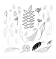 set of 32 hand drawn elements leaves vector image