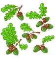 acorns set vector image