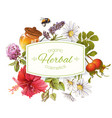 herbal cosmetics banner vector image