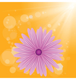 flower on sun background vector image