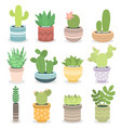 cactus nature green succulent tropical plant vector image