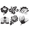 Black and White Set of Flowers vector image