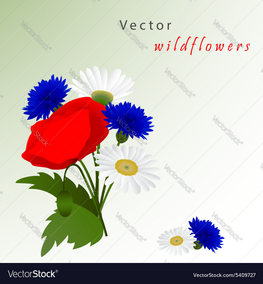 White background with chamomile vector