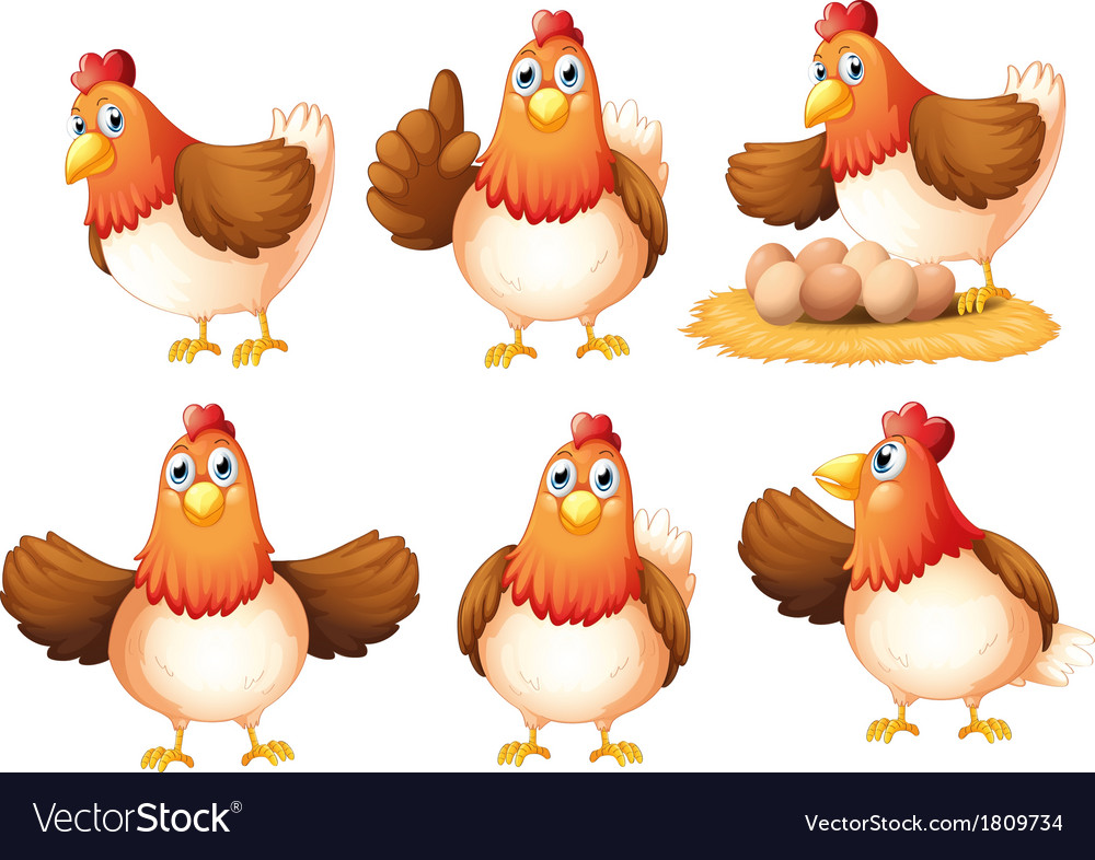 Six egglaying hens vector