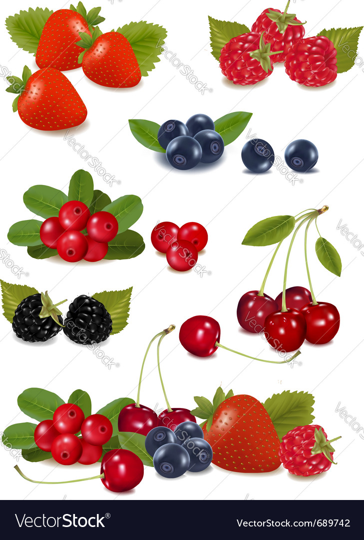 Big group of fresh berries vector