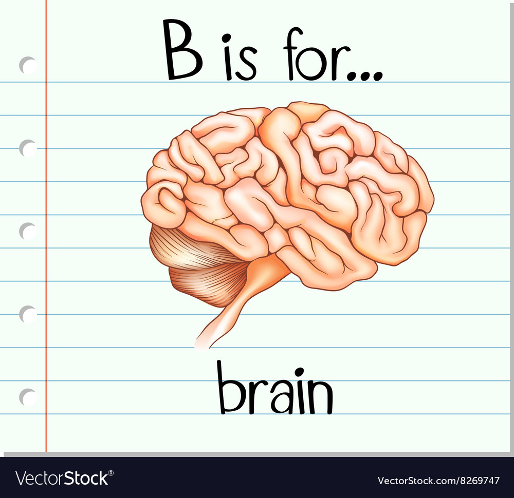 Flashcard alphabet b is for brain vector