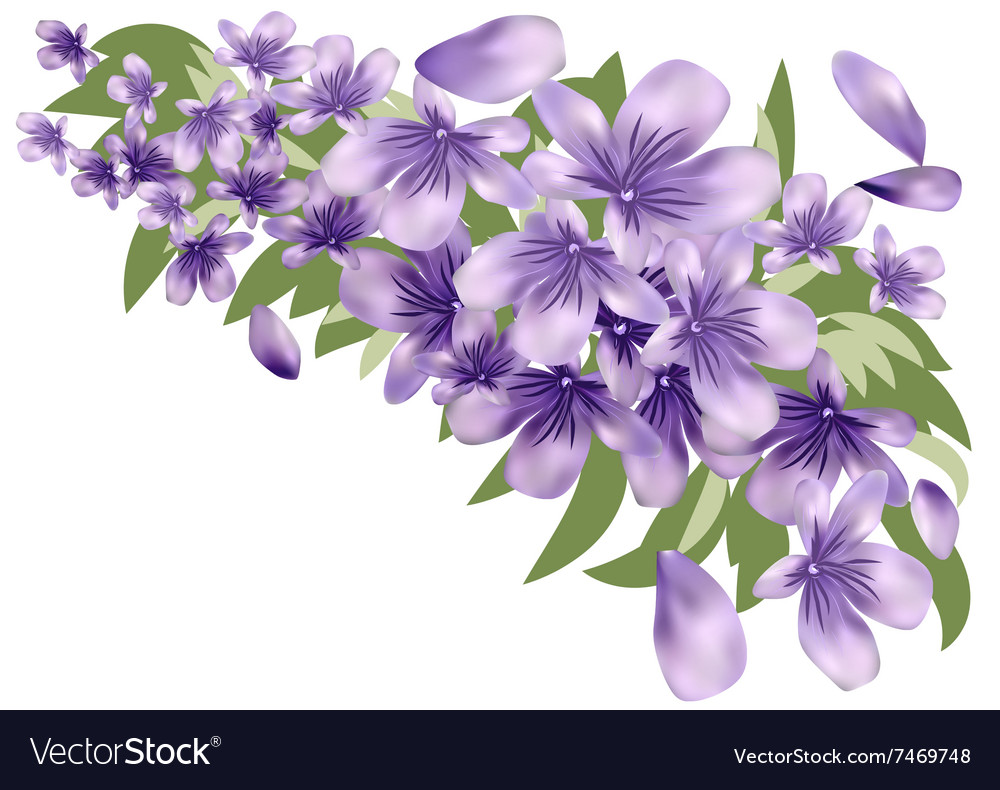 Lavender with leaves vector