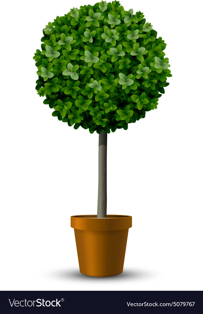 Decorative trimming boxwood tree vector