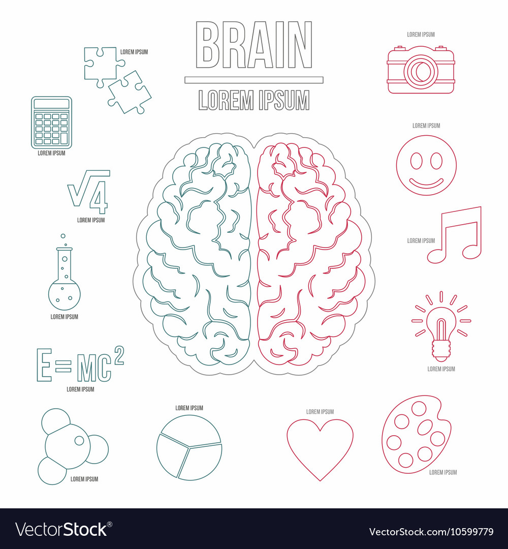 Human brain infographics set outline style vector