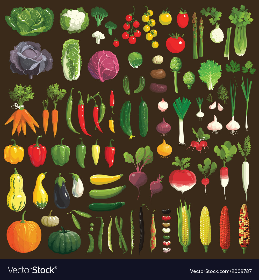 Vegetables-vector