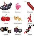 set of different berries vector image vector image