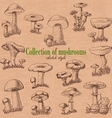 Collection of mushrooms in sketch style vector image