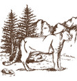 hand drawn cougar or mountain lion landscape vector image
