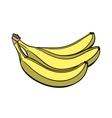Banana vector image