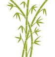 Green Bamboo stems vector image