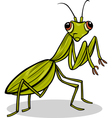 mantis insect cartoon vector image