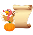 Cartoon turkey with vintage scroll paper isolated vector image