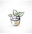 flower in pot grunge icon vector image