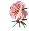 Delicate pink rose flower isolated vector image