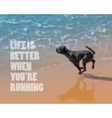 dog running on the beach Blurred background vector image