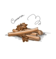 Cinnamon sketch for your design vector image