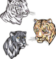 Heads of panther and tiger vector image