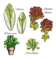salads and leafy vegetables icons set vector image