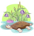 Cartoon tortoise vector image