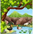 Ducks swimming in the pond vector image