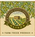 Vintage colorful olive harvest label vector image vector image