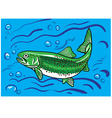 Trout fish in the water vector image