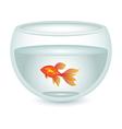 aquarium with gold fish vector image