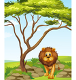 A lion under a tall tree vector image