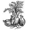 fennel finocchio vector image