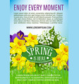 spring holiday poster of daffodils bouquet vector image