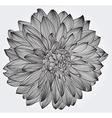 ink drawing of black dahlia flower vector image vector image