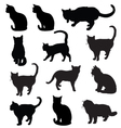 Cats silhouette in black vector image