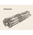 Cinnamon vintage hand drawn vector image