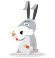 cartoon rabbit eating carrot vector image