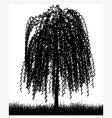 weeping willow tree vector image vector image